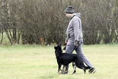 TB0A4727 (templeinmn) Tags: 2017 fall ipo mvsv schutzhund trial