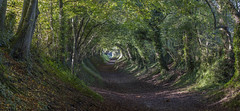 Halnaker Holloway (Forgotten Heritage) Tags: explore exploration green nature holloway tree tunnel south downs chichister