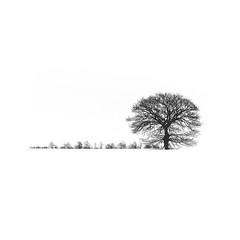 Tree (AIIex) Tags: albero tree biancoenero nikon d90 landscape paesaggio darktable gimpminimal linux blackandwhite