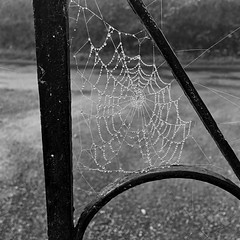 A spider's work of art (Explored) (JulieK (thanks for 8 million views)) Tags: squareformat nature art cobweb water droplets mist autumn iphonese bw monochrome blackandwhite metal wroughtiron