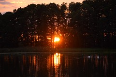 summer moods (JoannaRB2009) Tags: summer mood pond water reflections swans birds animals sunset sun trees silhouettes evening miliczponds stawymilickie lowersilesia dolnyśląsk dolinabaryczy polska poland nature