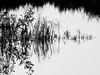 reflection (Darek Drapala) Tags: reflection reflects warsaw warszawa water waterscape bw blackwhite blackandwhite panasonic poland polska panasonicg5 nature vistula