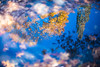 Ballard. Seattle. (D. Bradford) Tags: fall water reflection seattle bokeh leaves ballard