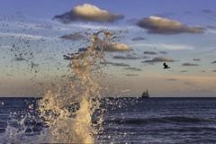 Key West, FL (AgatyEugen) Tags: 60d canon landscape photography nice beautiful vacation travel water sunset boat birds bird waves wave beach ocean cloud clouds sky islandlife island seascape florida floridakeys keywest