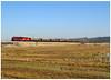 Arneiros 08-03-15 (P.Soares) Tags: locomotiva linha linhas locomotivas train trains tren takargo madeira mercadorias vagões comboio comboios caminhodeferro