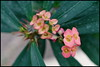 DSC_6145 (when_night_falling) Tags: macro auteuil serres 2017 fleurs couleurs