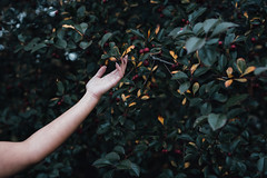 *** (Gabriela Tulian) Tags: season plant park pattern women yellow touch summerend tender texture one natural detail elegance elegant fall autumnal beautiful bright fingers hold leaf hang hand fresh gently girl greenpeace autumn
