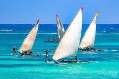 The Diani Ngalawa Regatta coming on 21 January 2018