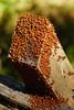 this is indicative of the Bay Area housing market..... (fromkmr) Tags: sonya99ii redwoodregionalpark oaklandca ebparksok hiking minoltavintage minolta70210 autumn ladybugs crowded