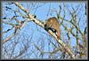 Catbird - revisited (WanaM3) Tags: wanam3 sony a700 sonya700 texas pasadena horsepenbayou bayou clearlakecity tree branch outdoors nature wildlife canoeing paddling cat bobcat