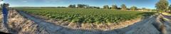 Alfalfa Fields in South Valley (JoelDeluxe) Tags: southvalley farm fields alfalfa panorama landscape hdr joeldeluxe