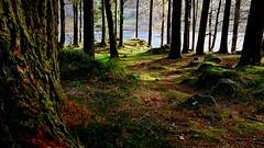 Morning light at Blea Tarn (mandysp8) Tags: lake woods sunrise southlakeland autumn moss