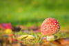 Flying Fungus (Martine Lambrechts) Tags: flying fungus nature macro autumn mushroom
