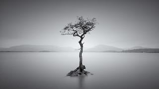 That Tree!!