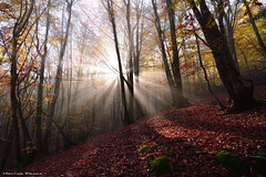 Breaking Through (Hector Prada) Tags: bosque niebla bruma hojas otoño contraluz árbol musgo magic luz forest fog mist leaves autumn tree moss light sun sunbeams mágico spriritual paísvasco basquecountry