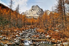 The quiet creek (_Nick Outdoor Photography_) Tags: wild alpeveglia alps monteleone torrente longexposure hdr manfrottotripod canoneos6d hiking trek wood larches woodoflarches quietcreek perspectiveinfall piemonte redforest forest park parconaturalealpevegliaedevero beauty