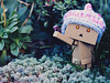 Miss Hipster (Jam-Gloom) Tags: olympus olympusuk olympusomd olympusomdem5 omdem5 omd em5 60mmmacro 60mm macro toy toyography toyphotography succulent succulents revoltech danbo danbomini danboard danboardmini innocentsmoothies innocentsmoothieshat thislittlehathelpssaveslifes ageuk knittedhat knitted