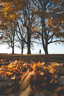 Fall strolls.🚶🍂