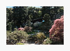 Spring Colors (bnishimoto) Tags: fuji fujifilm myfujifilm xpro2 hakonegardens saratoga bayarea photoessay 1855mm classicchrome color japanesegarden nature spring
