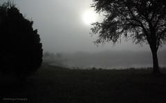 Through My Eyes (noddfa_imaginings) Tags: fog foggyday walsinghampark
