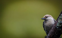 You know you've grown up, (knoxnc) Tags: bokeh nikon nature birdseed 158 outisde treebranches birdwildbirds d7200 finch specanimal ngc coth5