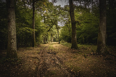 through the forest (Thos A.) Tags: forest trees tree path autumn leaf leaves burgundy nièvre forêt arbre automne bourgogne canon eos eos80d