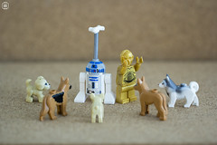 Here Doggie Doggie (Jezbags) Tags: lego legos toys toy starwars droid droids canon60d canon 60d 100mm closeup upclose dog dogs r2d2 c3p0