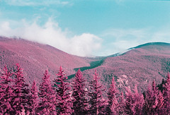 Candy Forests (Hayden_Williams) Tags: forest evergreen pink pine pinetrees colorful colorado colors purple surreal clouds cloudscape cloud sky hike nature adventure outdoors outside lomography lomo lomochromepurplexr100400 film fd50mmf18 analog analogue canonae1