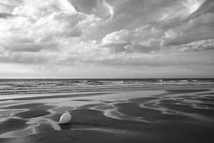 Boje (Meine Sicht) Tags: 2017 belgien fotografrainerrauen fotografie fuji fujifilm küste nordsee see strand xt2 wwwrauenfotode coast fujinonxf23mmf14 blackandwhite