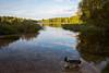 Beautiful Virginia Water... (Hector16) Tags: england virginiawater floraandfauna crownestate