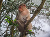 9. Monkey who did nt like Tim-1 (leemacey) Tags: hills nandi india tree monkey