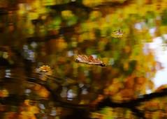 Autumn watercolors II (Mikhail Korolkov) Tags: autumn puddle reflection leaves trees watercolor fujifilm xe2 xc50230
