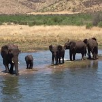 Elephants playing in the water thumbnail