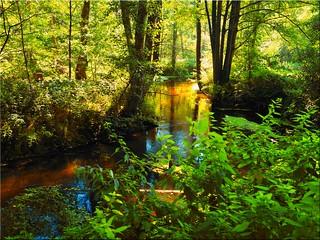 Green river landscape