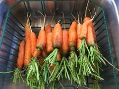 Carrot harvest (lindakowen) Tags: kitchen iphonography vegetables harvest garden carrots