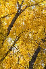 Dense fall foliage
