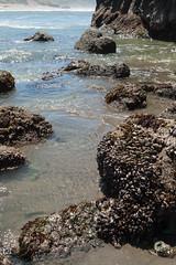 Hwy 101 CA-OR July 2018-50 (ntisocl) Tags: 2017 canon1dmarkiii canonef2470mmf28lusm hwy101 oregon oregoncoasthwy oregoncoast pacificnorthwest pacificocean pistolriverbeach coastline roadtrip sand waves