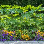 2017 - Montreal - Botanical Garden thumbnail