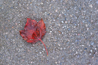 The Red Leave