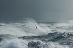 Storm Gull III (craig.denford) Tags: storm brian newhaven gull east sussex craigdenford