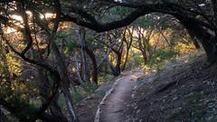 Like Something From the Hobbit (matthew.raybin) Tags: nature outdoors beautiful sunset sunlight travelgram travel traveler texas adventure adventures trees wanderlust explore park evening green hippie landscape tree woods
