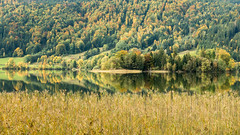 the colors of an Indian summer (hjuengst) Tags: indiansummer autumn herbst herbstfarben schliersee lake bavaria foliage trees water weed gräser bäume see orange october golden