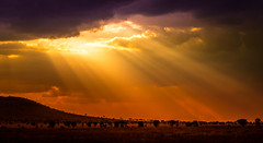 Lights of Sun on Serengeti #explored 03.10.17# (Beppe Rijs) Tags: africa afrika landschaft panorama serengeti sonne sunlight tansania tanzania clouds landscape light sunrays view paradise paradies sonnenuntergang himmel sky sundown silhouette