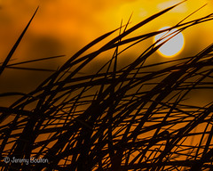 Grassy (JKmedia) Tags: summer sunset wales coast grass silhouette sun fire golden abstract boultonphotography northwales 2017 dinas