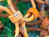 Chains (FredBaltus) Tags: normandië courseullessurmer normandie frankrijk fr