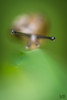 Portrait of Mister Snail (Le Gerbignol) Tags: snail escargot abstract abstrait portrait eye diffuse boss proud fier