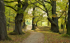 Chestnut forest in Harz (nguyenkieulinh) Tags: forest autumn chestnut yellow leaves european germany landscape trees