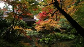 Autumn Colours / Kyoto Nanzen-ji Nanzen-in Garden - facing hojo京都 南禅寺 南禅院