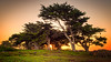 Pacific Grove (Bob.Z) Tags: pacificgrove california unitedstates us monterey usa ca ocean pacific tree cypress