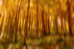 I Told You To Stay Away From Those Mushrooms! (Alfred Grupstra) Tags: nature backgrounds abstract yellow defocused tree pattern forest leaf outdoors summer multicolored plant autumn closeup branch colors nopeople